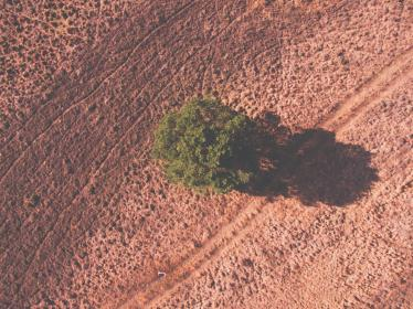 tree, plant, nature, farm, land, field, dry, drought, sunny, day