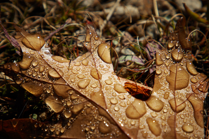 wet,  leaf,  background,  oak,  dew,  rain,  water,  close up,  plant,  ground,  fallen,  texture,  natural,  nature,  fall,  seasonal,  brown