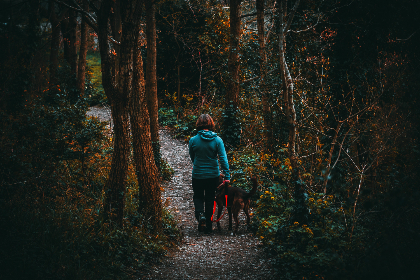 woman,  hike,  forest,  woods,  animal,  pet,  tree,  trail,  walk,  dog,  labrador