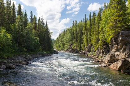 river, water, rocks, green, trees, plant, forest, nature, sky, clouds