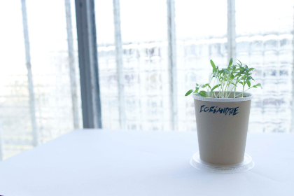 coriander, herb, plant, pot, kitchen, window, day, bright, table