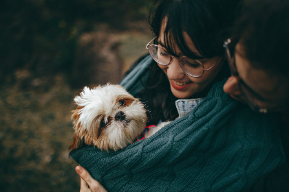 Shih Tzu,  puppy,  dog,  smile,  man,  woman,  happy,  animals,  doggo,  glasses,  female,  girl,  male,  family