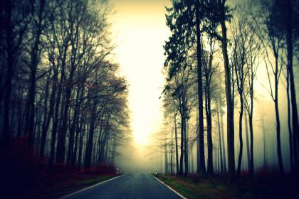 road, path, trees, plants, nature, grass, view, sunrise