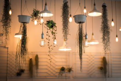 lights, lamp, design, art, aesthetic, plant, orchids, green