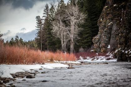 nature, forests, grass, bushes, trees, stream, river, ripples, surface, snow, sky, clouds