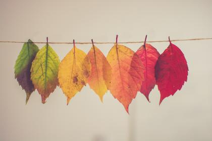 leaves, colorful, nature, tree, plant, autumn, fall