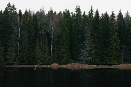 trees, plant, nature, lake, water, reflection, grass, sky, forest, outdoor