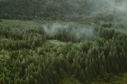 green, trees, plants, forest, grass, fog, cold, weather, nature