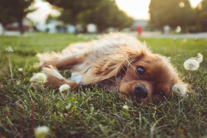 dog, puppy, pet, animal, playground, grass, flower, blur