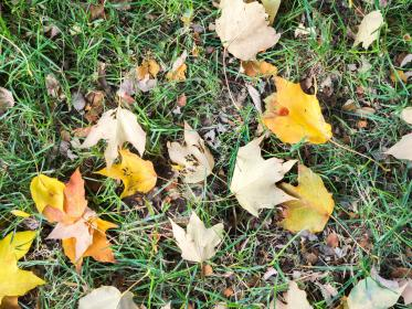 grass, ground, leaves, leaf, fall, autumn, nature