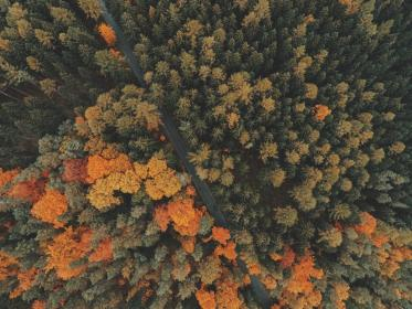 nature, landscape, woods, forest, trees, leaves, green, autumn, fall, aerial