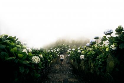 green, leaf, flower, plant, nature, garden, farm, field, fog, cold, weather, pathway, travel, people, girl, alone, walking