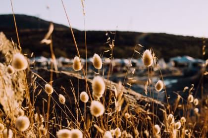 free photo of grass  outdoor