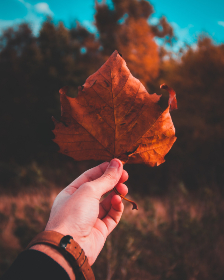autumn,  leaf,  hand,  arm,  people,  fall,  tree,  forest,  watch