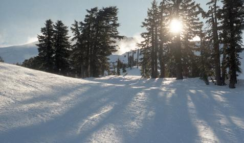 people, snow, winter, cold, ice, white, shadow, plants, trees, cable, pine, sunshine, sky, clouds, travel, adventure, trip