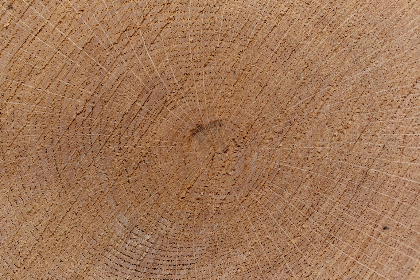 free photo of tree   ring