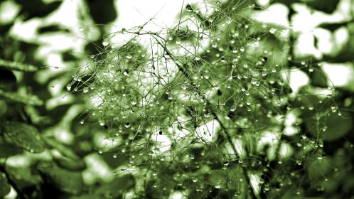 green, plants, nature, water, drops, droplets, dew, stems, branches, stalks