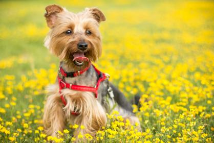 blur, bokeh, playground, dog, puppy, animal, pet, yellow, flower, outdoor, garden, nature