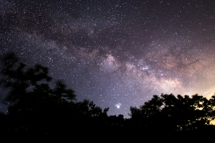 Photo of the milky way and trees
