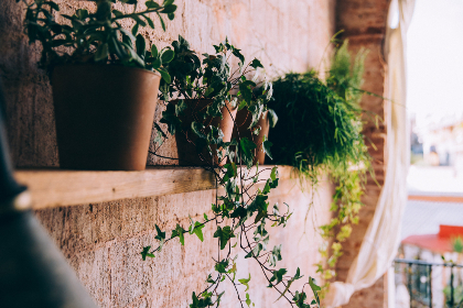 free photo of potted   plants
