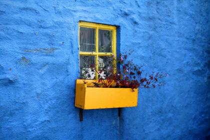 house, home, residence, exterior, concrete, blue, wall, yellow window, pane, flowers, box, plants still, minimalist