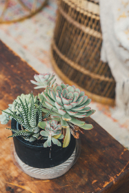 potted,  plant,  house,  indoor,  home,  flower,  interior,  room,  nature,  table,  wood,  green,  decoration,  decorative