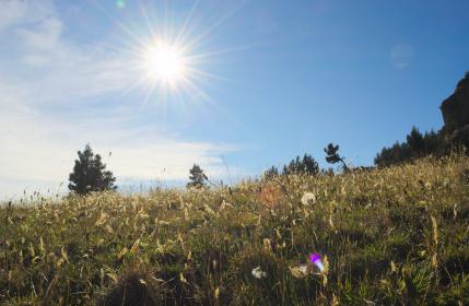 sunlight, sunshine, sunny, summer, trees, grass, field, mountain, sky, nature