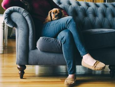 couch, feet, shoes, wooden, floor, dog, puppy, brown, sofa, jeans, woman, lady, girl,pet, living, room