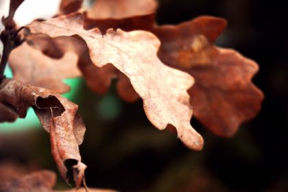 dry, environment, leaf, tree, plant, nature, outdoor, blur
