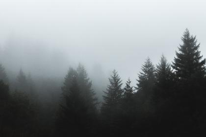 trees, forest, woods, nature, fog, foggy