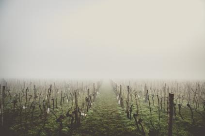 nature, grass, grasslands, fence, branches, twigs, wood, wire, paper, fog, ominous, rows, perspective, patterns