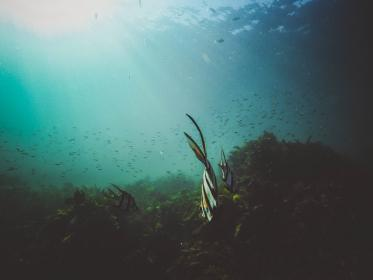 nature, water, ocean, sea, underwater, marine, life, animals, fish, schools, seaweeds, corals, surface, light, leaks