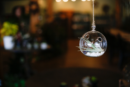 air,   plants,   hanging,   terrarium,   decoration,   nature,   object,   bokeh,   indoors,   glass,   ball,   vase,   botany