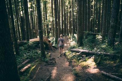 green, trees, plant, nature, forest, woods, logs, people, travel, adventure, outdoor, sunny, day