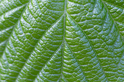 plant,   leaf,   macro,   green,   garden,   fresh,   beautiful,   organic,   outdoors,   nature,   plantlife,  background,  detail,  pattern, close up