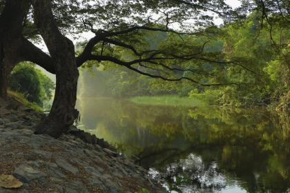 nature, landscape, trees, leaves, forest, green, water, river, lake, travel, adventure