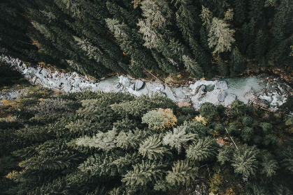 drone, river, wood, nature, trees, forest, flow, cold, overhead, view, scenic, landscape