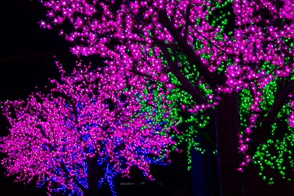 colorful,  lights,  background,  trees,  night,  purple,  green,  abstract,  outdoors,  branches,  decoration,  illuminated,  ornament,  xmas,  glow