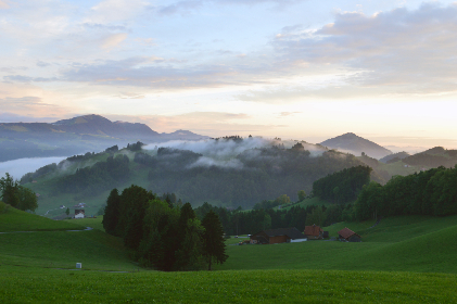 alps,  switzerland,  fog,  mountain, travel, vacation, spring, morning, trees, nature