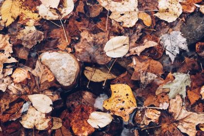 leaves, green, plant, garden, dried, fall, autumn
