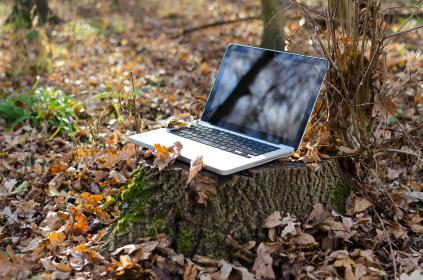 laptop, gadget, technology, trees, leaves, nature, outdoor, autumn, trunk, reflection, sunshine