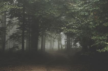 nature, landscape, forest, trees, fog, ominous, eerie
