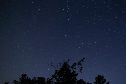 tree,   night,   starry,   sky,   galaxy,   space,   trees,   silhouette,   nature,   nighttime,   astronomy,   outdoors,   stars,   rural,   astrophotography