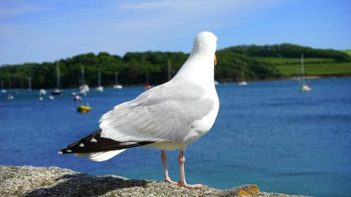 animals, birds, seagulls, perched, stand, back, watch, water, lakes, river, boats, yachts, lush, vegetation
