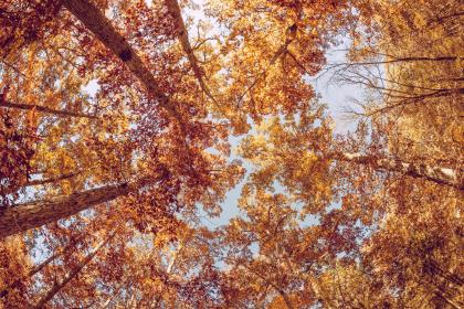 trees, leaves, branches, fall, autumn, sky, nature, outdoors