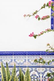 flower, green, leaf, plant, nature, outdoor, wall, blue, tiles