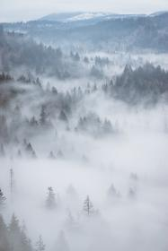 aerial, fog, forest, woods, trees, green, mountain, travel, adventure