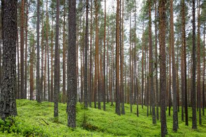 trees, plants, nature, forest, green, grass, landscape