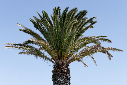 palm trees, blue, sky, nature, outdoors, trees, vacation, travel, tropical, sunny, summer, warm, leaves, environment, isolated