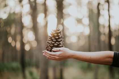 pine, cone, hand, ring, arm, nature, blur, bokeh